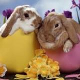 Week End di Pasqua 2/3 notti - Bimbi che Sorpresa!