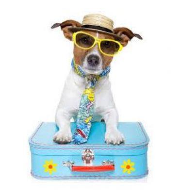 Offerte vacanze con animali a Rimini