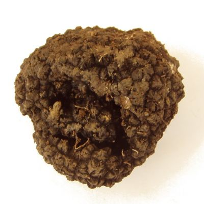 National Exhibition of truffles