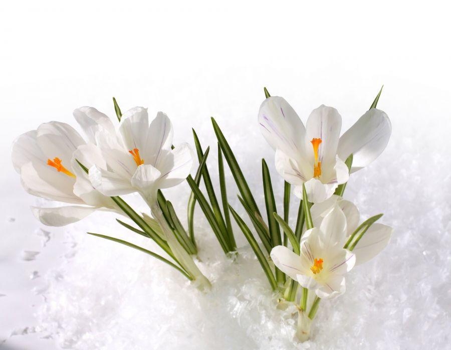 Pasqua con noi nella valle dello Smeraldo ai piedi delle Piccole Dolomiti...