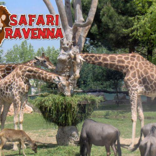 Last minute Zoo Safari 25 aprile e 1 maggio