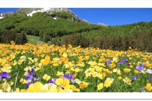 Vacanza in Montagna 3 giorni/2 notti