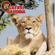 Offerta Hotel e  Parco Zoo Safari di Ravenna vicino a Mirabilandia