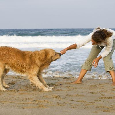 Offerte vacanze con animali a Cesenatico