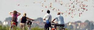 Offerta  Primavera Slow  in bicicletta tutta la famiglia Hotel Caesar Lido di Savio Ravenna Milano Marittima