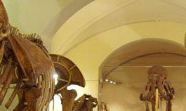 Natural History Museum von Florenz, Sektion Geologie und Paläontologie. Interessant für Erwachsene und Kinder