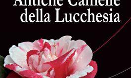 Anzeigen Antike Kamelien in Pieve di Compito (Lucca)