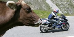 Internationale Motoradausfahrt des Stelvio