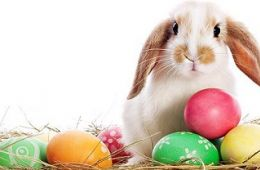 Special Offers Easter