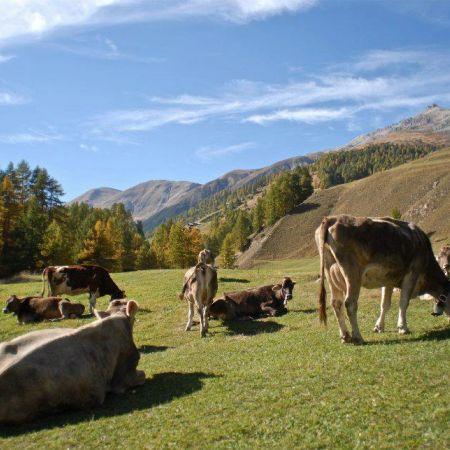 Alpen Fest Livigno