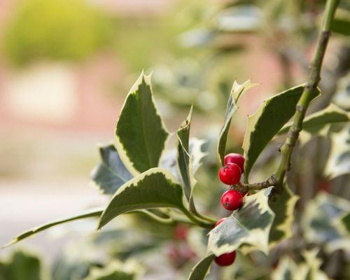 Last minute dicembre San Martino di Castrozza