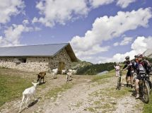 Mountain Bike Madonna di Campiglio