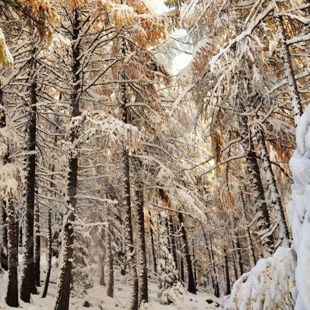 Traversata dal Passo Mendola al Monte Macaion ESCURSIONI CON CIASPOLE