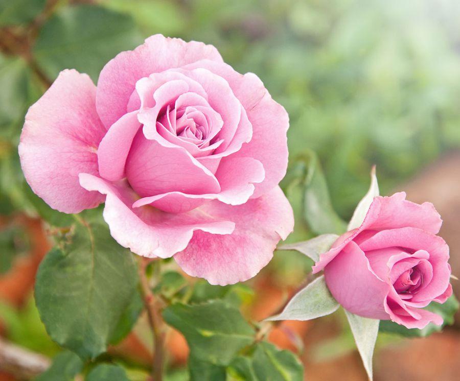 Giardino della Rosa - Ronzone