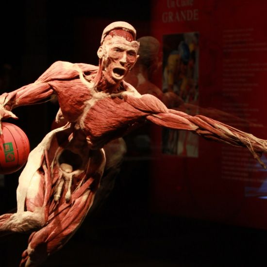 BODY WORLDS: The Happiness Project Discover the effects of HAPPINESS on your health!