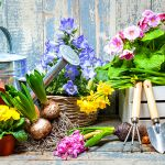 Offerte Flora Trade Show