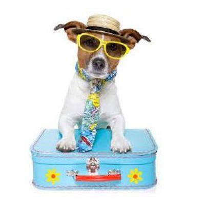 Holiday with your PETS in Rimini 2019 in PET-HOTEL