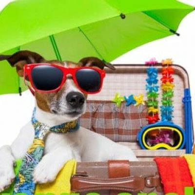 Holiday with your PETS in Rimini 2020 in PET-HOTEL