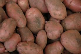 Sagra patata rossa Colfiorito