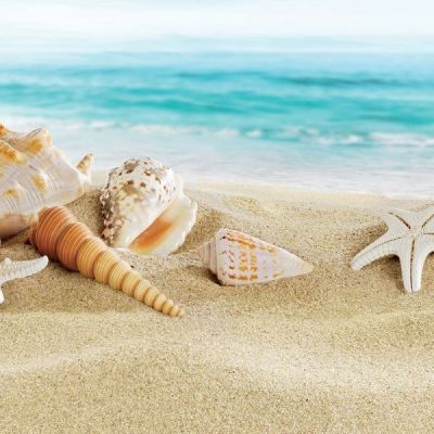 Summer Holidays Offer Rimini