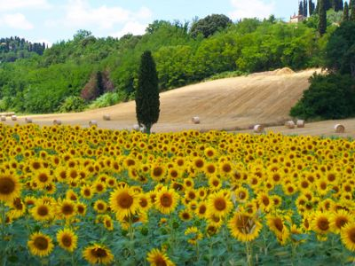 Summer 2020 in Umbria
