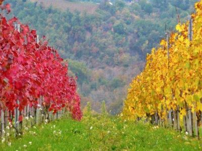 Autumn in Umbria 2020