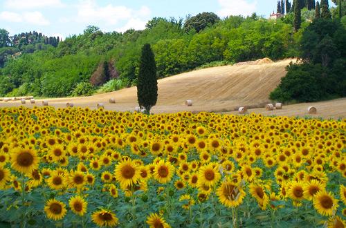 Estate 2020  in Umbria