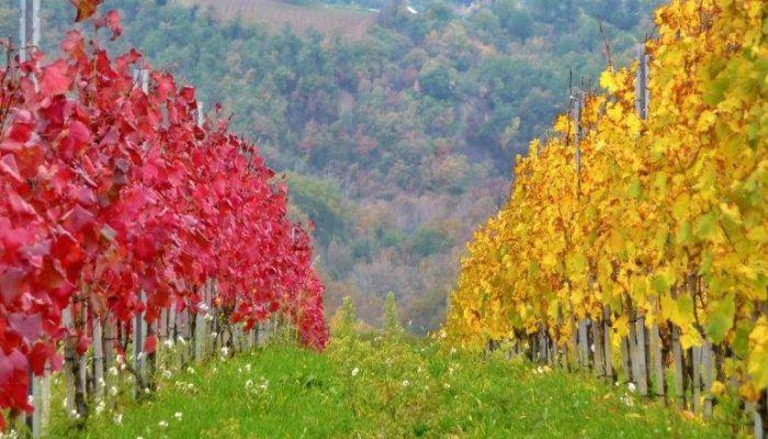 Autumn in Umbria 2020