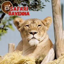 Offerta Famiglia  allo Zoo Safari Ravenna