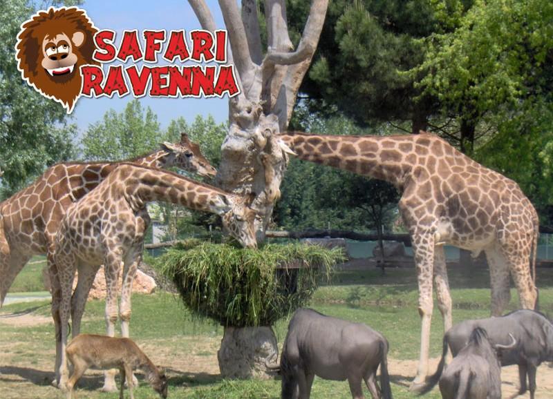 Pacchetto Hotel Suisse e ZooSafari di Ravenna
