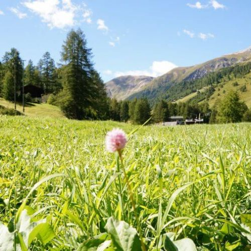 Summer  Offer in Valtellina