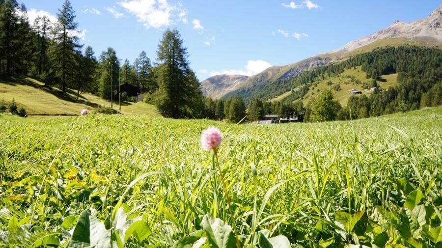 Offerte estate in Valtellina