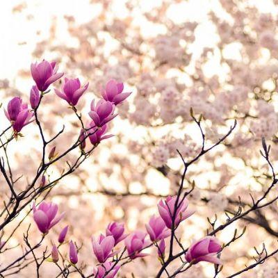 Primavera di benessere in Toscana