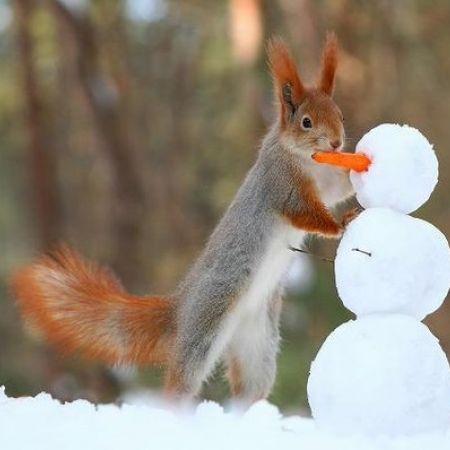 Scoiattolo Inverno