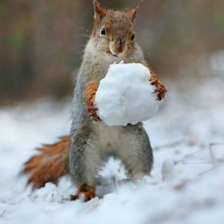 Squirrel Winter Promotion