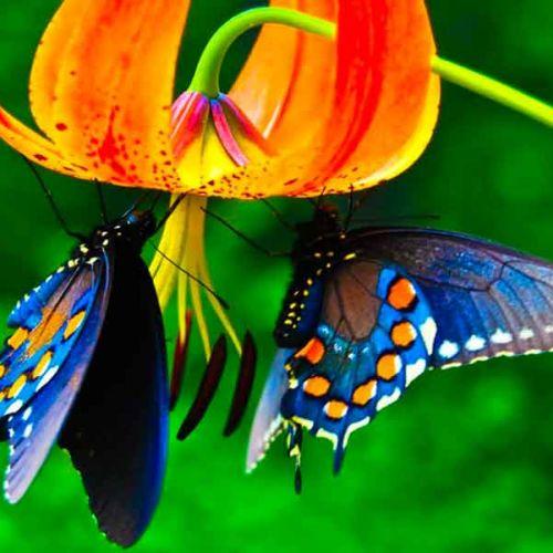 Casa delle farfalle con visita guidata gratuita