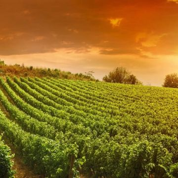 Discover The Land Of Franciacorta