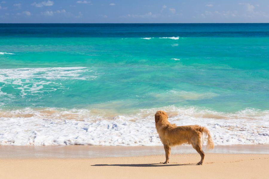 Case per vacanza a Rimini e Riccione che accettano animali