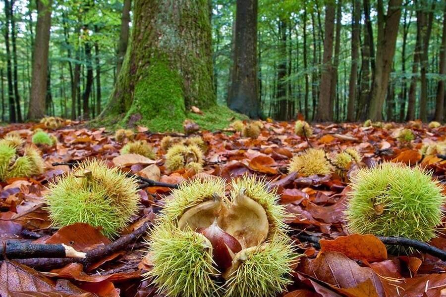 Offerta autunno nelle Foreste Casentinesi