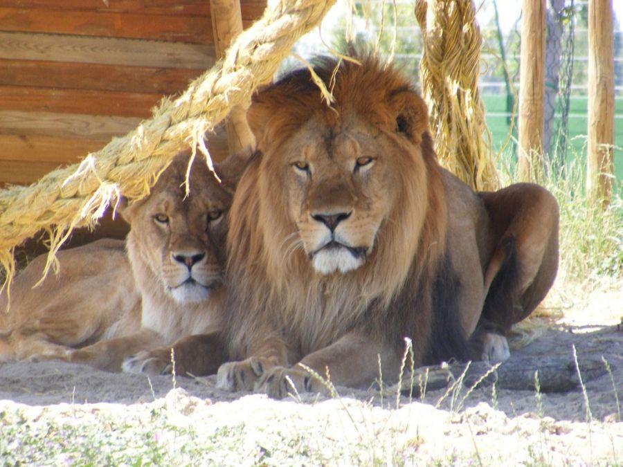 Zoo Safari Ravenna nuovo parco davanti a Mirabilandia!