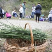 Raccolta delle Castagne nel Bosco e Visita alla Sagra delle Castagne di Montefiore Conca