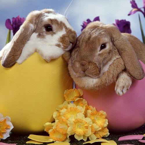 Offerta benessere Pasqua a Levico - Trentino