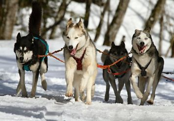 Husky Village Livigno Package