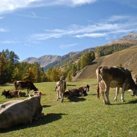 Alpen Fest im Livigno