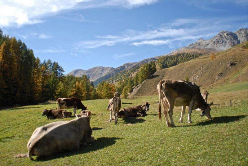 Alpen Fest a Livigno