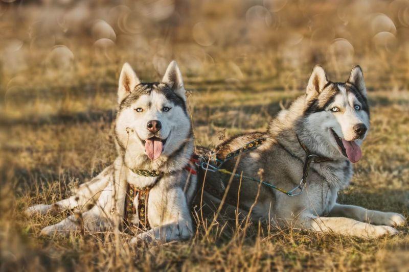 Trekking con gli husky