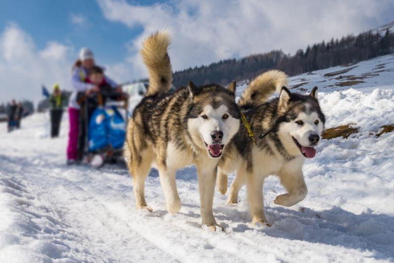 Offerte per l'Husky Village vicino a Livigno