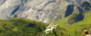 Offerte vacanze Trentino estate 2016
