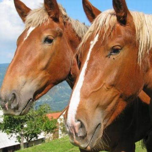 A cavallo in Appennino