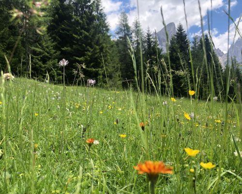 Offerta Giugno e Settembre in Trentino